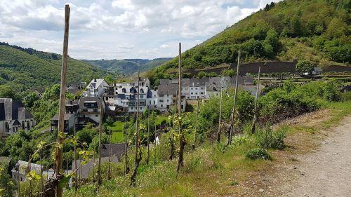 town of klotten mosel wine