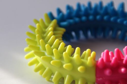 toy dog gum