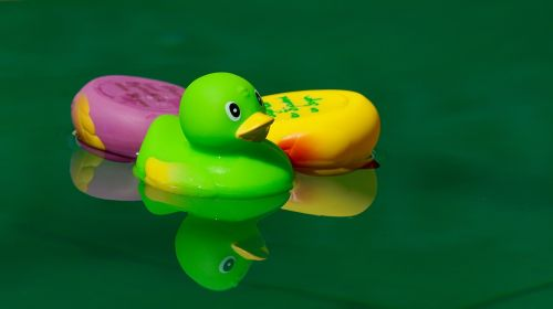 toys squeak duck in the water
