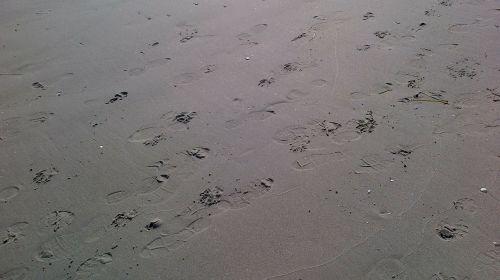 traces footprints beach