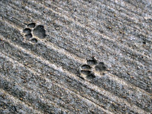 pėdsakai,katė,trasa,betonas,kojos,Paties spausdinimas,gyvūno trasa,atsekti