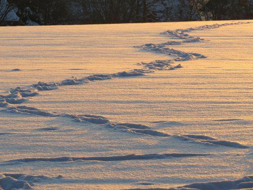 traces snow snow lane