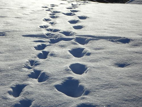 traces tracks in the snow snow