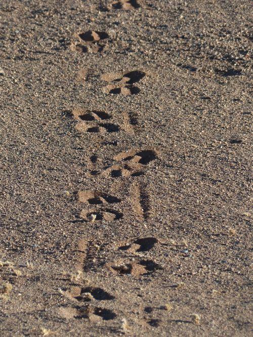 traces wüstensand footprints