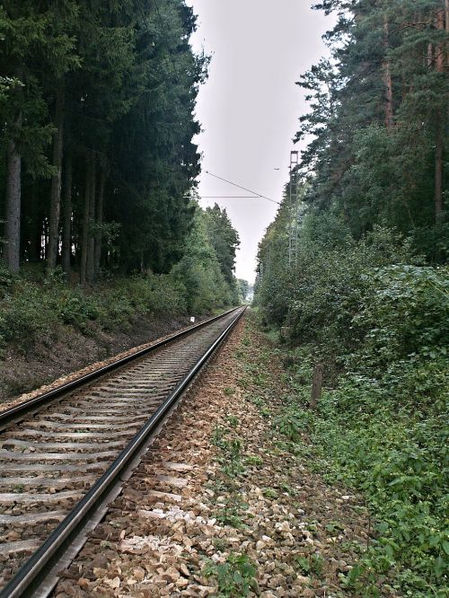 track forest vista