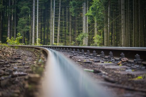track forest macro
