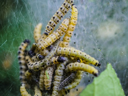 track  web  butterfly