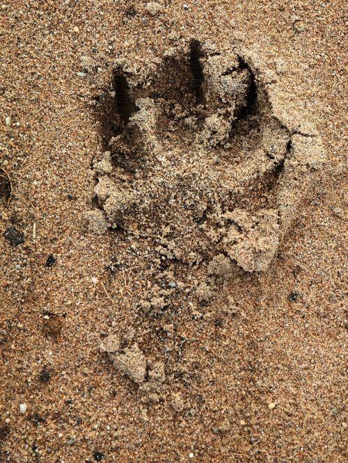 track dog paw paw print