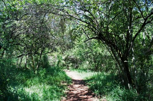Track Leading Through Thicket