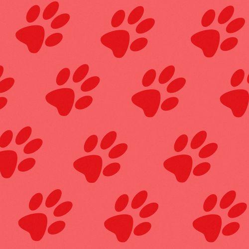 tracks prints paws