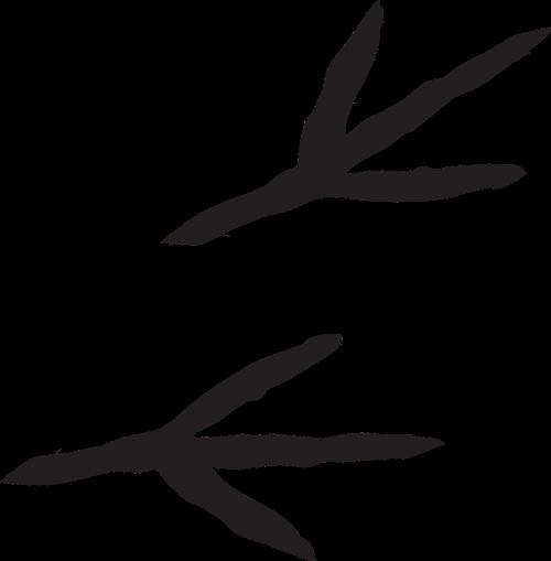 tracks prints markings