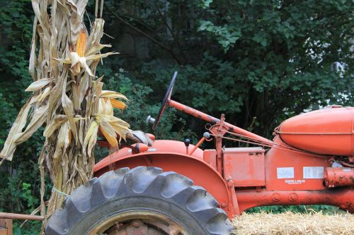 tractor corn stalks red tractor
