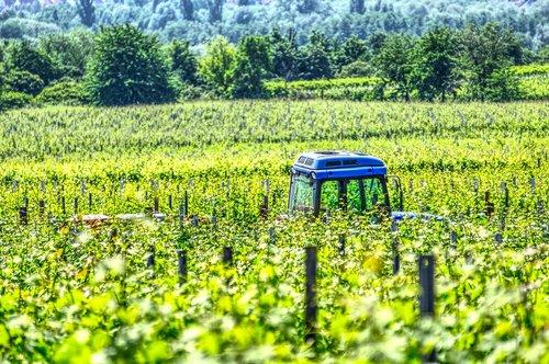 tractor  vineyard tractor  vineyard