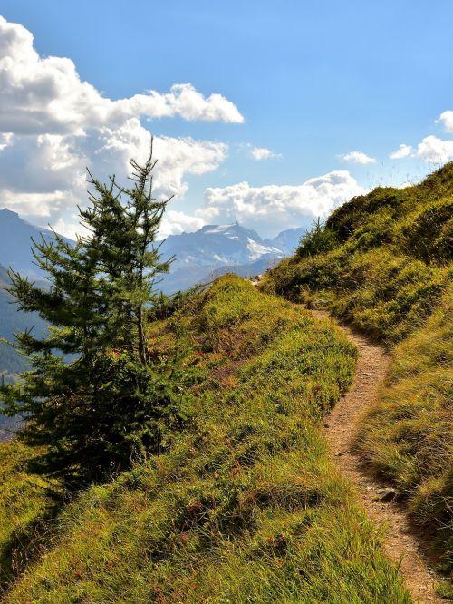 trail fir mountains