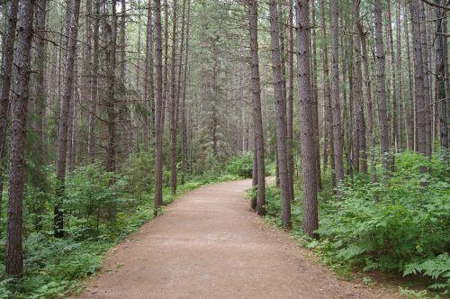 trail algonquin park ontario