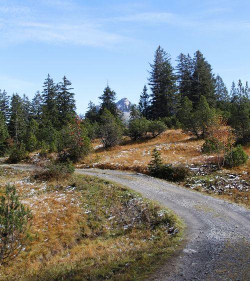 takas,žygiai,miškas,kalnai,eglė,medis,kreivė,gamta