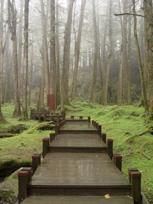 trail,forest,green,fog