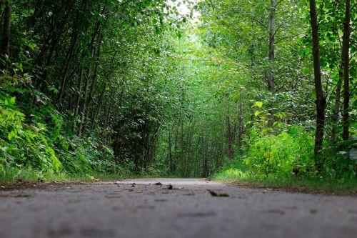 trail hike nature