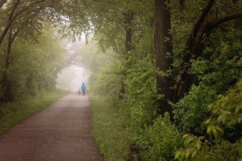 trail woods fog