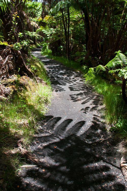 trail shadow hiking