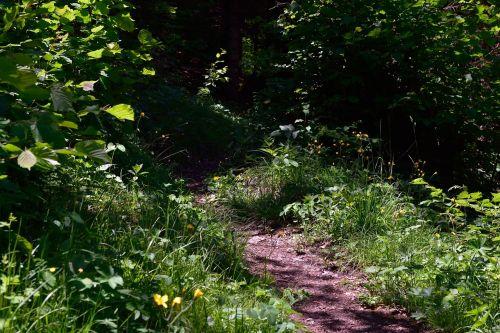 takas,kelias,gamtos takas,miško takas,gamta,toli,augalas,žalias