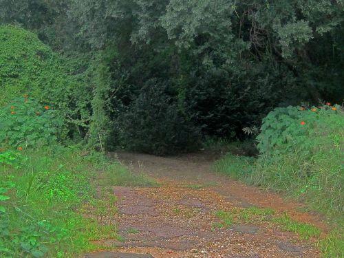 Trail Through Dense Vegetation