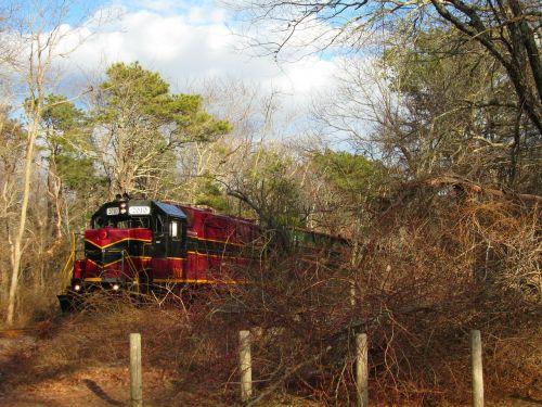 train nature woods