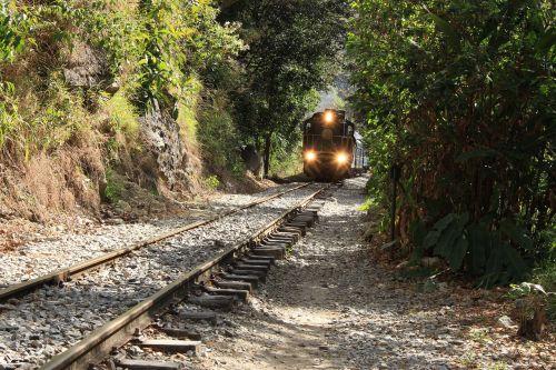 train jungle seemed