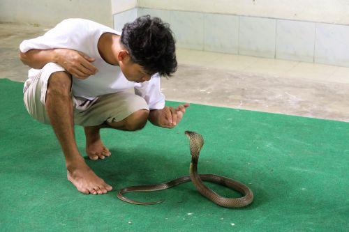 snake trainer cobra