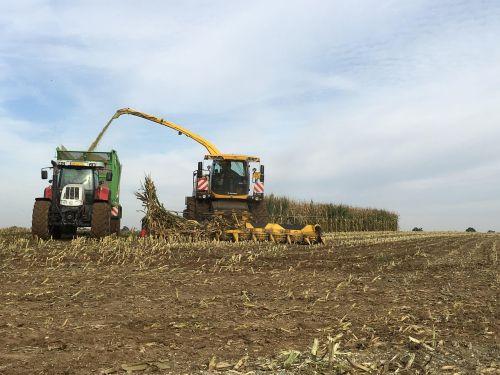 traktor harvest corn