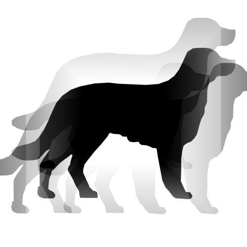 Transparent Split Dog