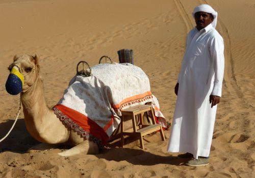 transport dromedary desert