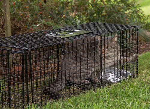 trap cat cat trap