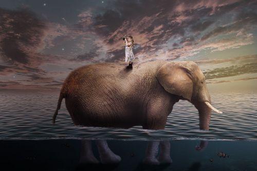 travel elephant child