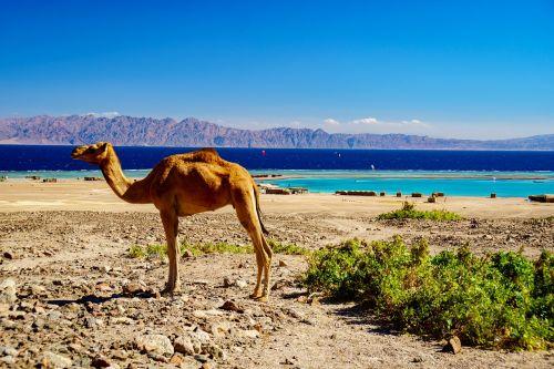 travel sand nature