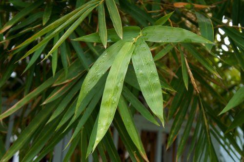 tre the leaves vietnam