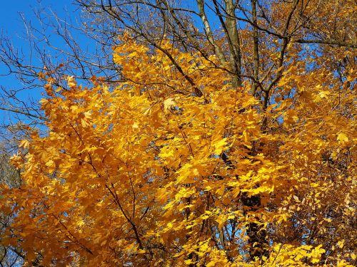 tree autumn autumn gold