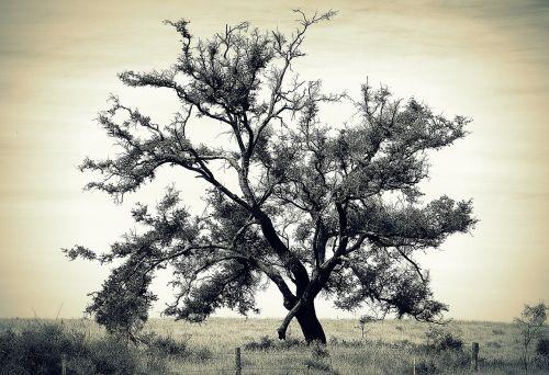 medis,izoliuotas,Šalis,gamta,senas,kraštovaizdis,grazus krastovaizdis