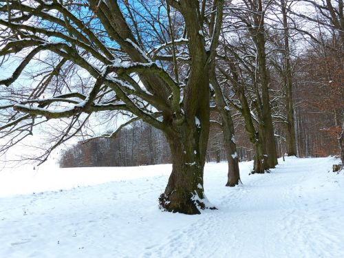 tree avenue snow