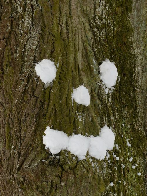 tree snow forest spirit