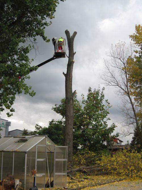 tree cases dangerous