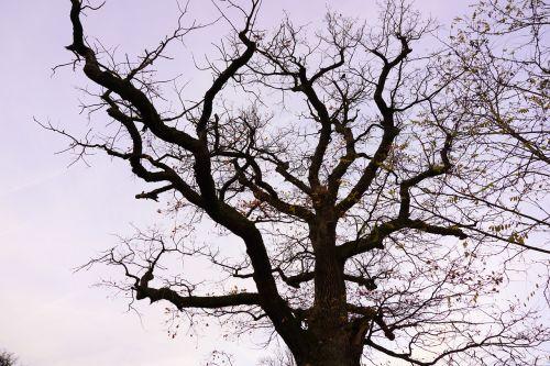 tree oak aesthetic