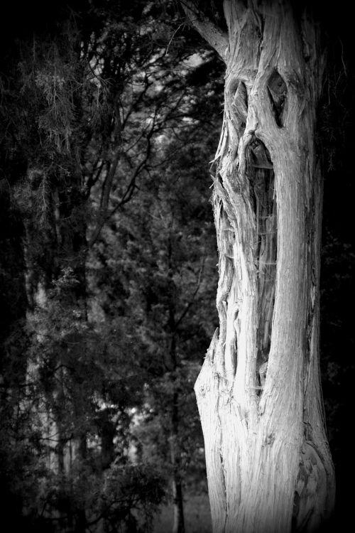 tree fash face