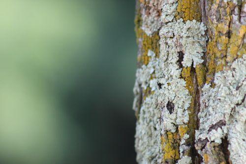 tree nature wood