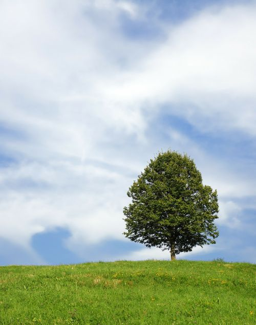 tree lonely meadow