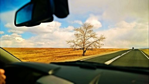 tree road steppe