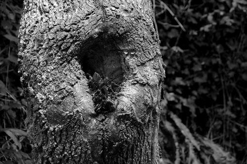 tree wood nature