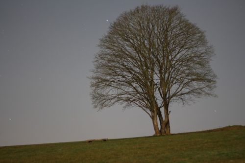tree night meadow