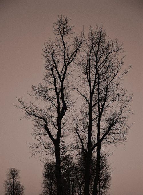 tree sky gradient