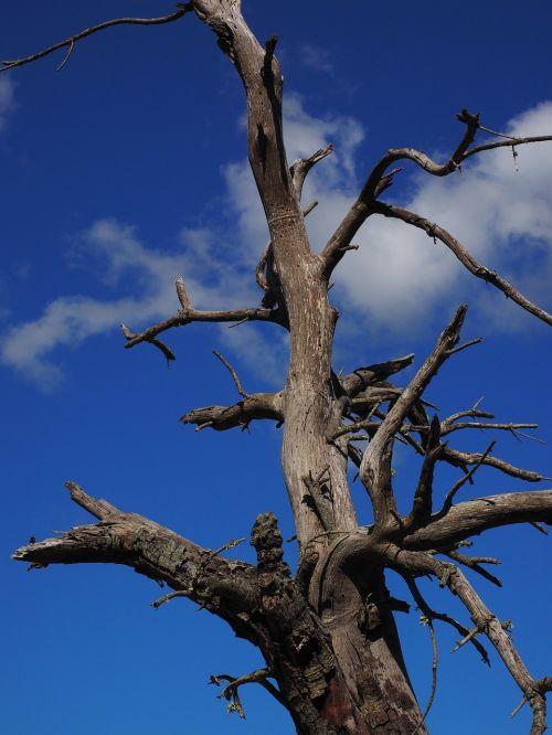 tree dead plant wood